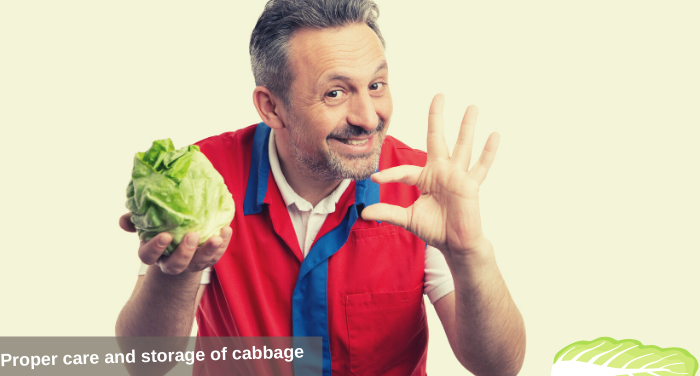 Proper care and storage of cabbage